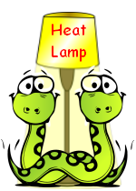 Image of two snakes lying beneath a heat lamp.