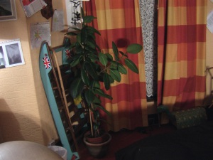 A picture of my studio den (Ronald the rubber plant)